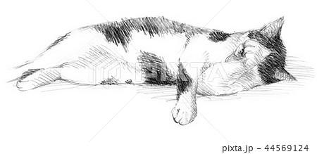 白と黒の猫の鉛筆クロッキー 44569124