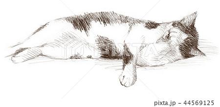 白と黒の猫の鉛筆クロッキー 44569125