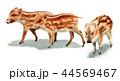 水彩で描いたイノシシの子/瓜坊 44569467
