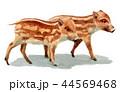 水彩で描いたイノシシの子/瓜坊 44569468