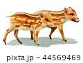 水彩で描いたイノシシの子/瓜坊 44569469
