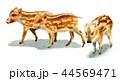 水彩で描いたイノシシの子/瓜坊 44569471