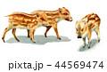 水彩で描いたイノシシの子/瓜坊 44569474