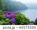 籾木池 紫陽花 梅雨の写真 44573500