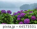 籾木池 紫陽花 梅雨の写真 44573501