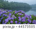 籾木池 紫陽花 梅雨の写真 44573505