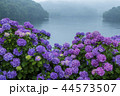 籾木池 紫陽花 梅雨の写真 44573507