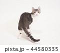 振り向いた仔猫(ゆず) 44580335