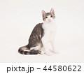 お座りした仔猫(ゆず) 44580622