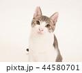 お座りした仔猫のポートレート(ゆず) 44580701