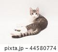 お座りした仔猫(ゆず) 44580774
