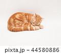 眠る仔猫(にゃーすけ) 44580886