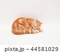 眠る仔猫(にゃーすけ) 44581029