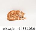 グルーミングをする仔猫(にゃーすけ) 44581030