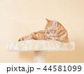 眠る仔猫(にゃーすけ) 44581099