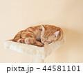 眠る仔猫(にゃーすけ) 44581101