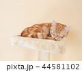 眠る仔猫(にゃーすけ) 44581102