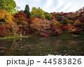 用作公園 紅葉 池の写真 44583826