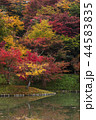 用作公園 紅葉 池の写真 44583835