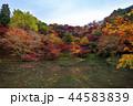 用作公園 紅葉 池の写真 44583839
