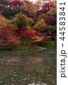 用作公園 紅葉 池の写真 44583841