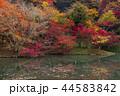 用作公園 紅葉 池の写真 44583842