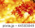秋イメージ 秋 紅葉の写真 44583849