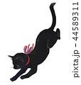 猫 動物 白バックのイラスト 44589311