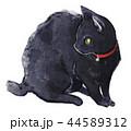 猫 動物 白バックのイラスト 44589312