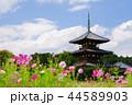 奈良斑鳩の里・清々しい秋の法起寺5 44589903