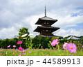 奈良斑鳩の里・清々しい秋の法起寺13 44589913