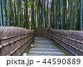 竹林 化野念仏寺 44590889