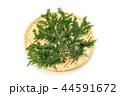 檜 桧 葉の写真 44591672