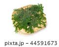檜 桧 葉の写真 44591673