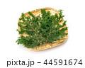 檜 桧 葉の写真 44591674