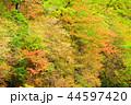 初秋 紅葉 植物の写真 44597420