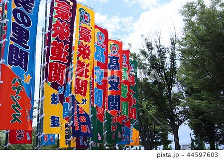 大相撲地方巡業ののぼり 44597603