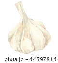 大蒜 にんにく 野菜のイラスト 44597814