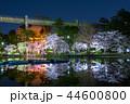 千葉公園 夜桜ライトアップ (千葉県千葉市中央区) 2018年3月 44600800