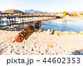 日本 ジャパン 日本国の写真 44602353
