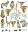 動物 アフリカ大陸 アフリカ産のイラスト 44603779