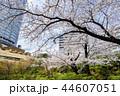 東京 六本木ヒルズ 毛利庭園の桜 44607051