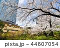 東京 六本木ヒルズ 毛利庭園の桜 44607054