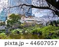 東京 六本木ヒルズ 毛利庭園の桜 44607057