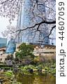 東京 六本木ヒルズ 毛利庭園の桜 44607059