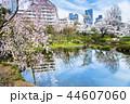 東京 六本木ヒルズ 毛利庭園の桜 44607060
