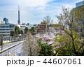 東京 六本木ヒルズ 毛利庭園の桜 44607061
