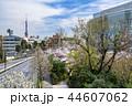東京 六本木ヒルズ 毛利庭園の桜 44607062