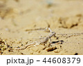 とかげ トカゲ 蜥蜴の写真 44608379
