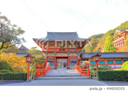 朝日を浴びる秋の祐徳稲荷神社(佐賀県鹿島市) 44609203
